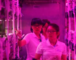 Студенты из Китая начинают 200-дневный эксперимент имитации проживания на другой планете