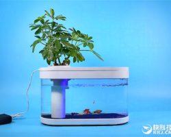 Xiaomi представила очередной неожиданный продукт: аквариум Xiaomi Fish Tank